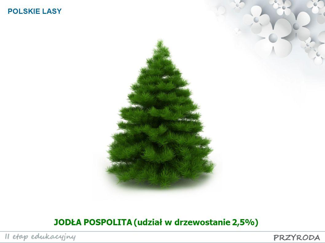 POLSKIE LASY JODŁA POSPOLITA (udział w drzewostanie 2,5%)