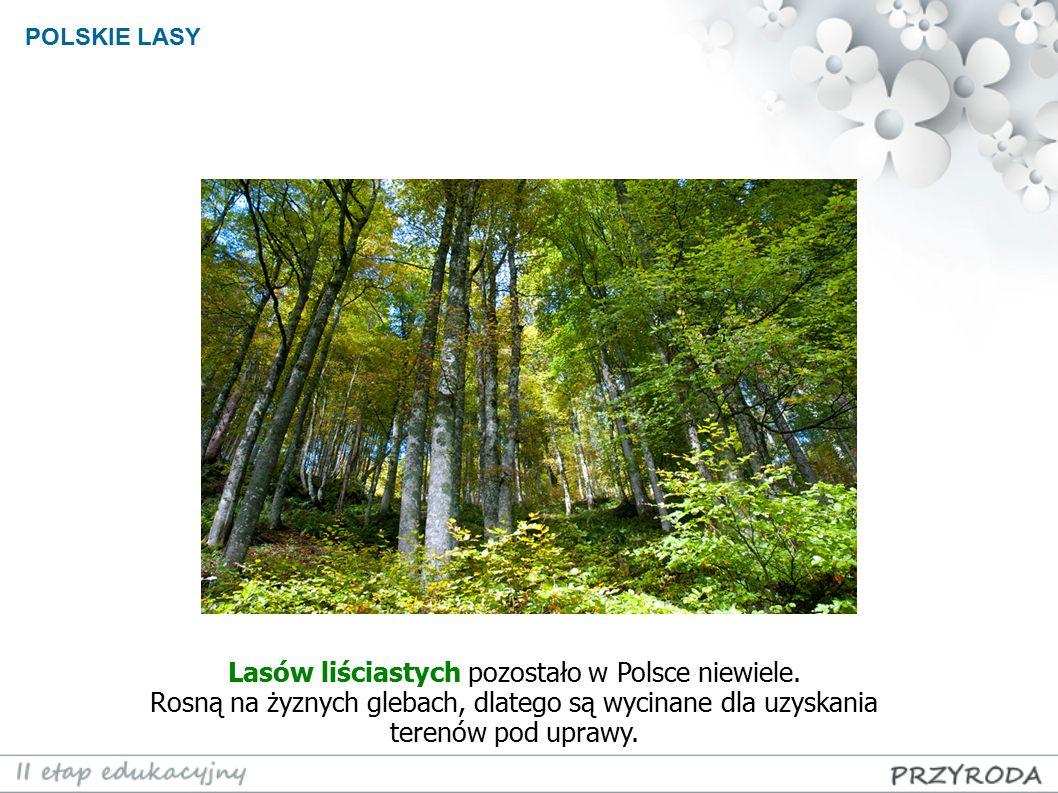 POLSKIE LASY Lasów liściastych pozostało w Polsce niewiele. Rosną na żyznych glebach, dlatego są wycinane dla uzyskania terenów pod uprawy.