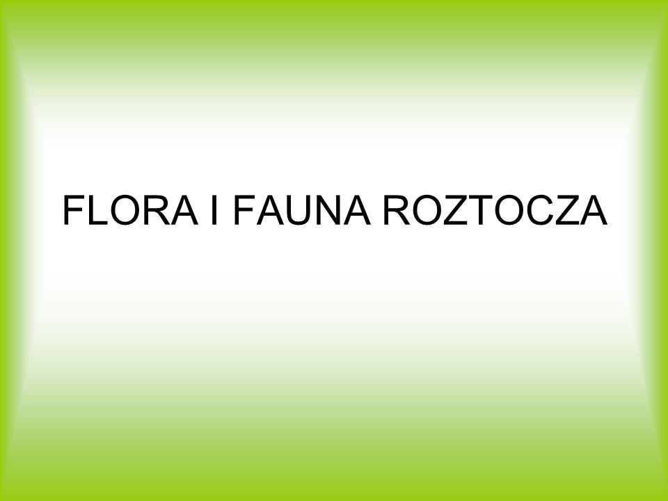 FLORA I FAUNA ROZTOCZA