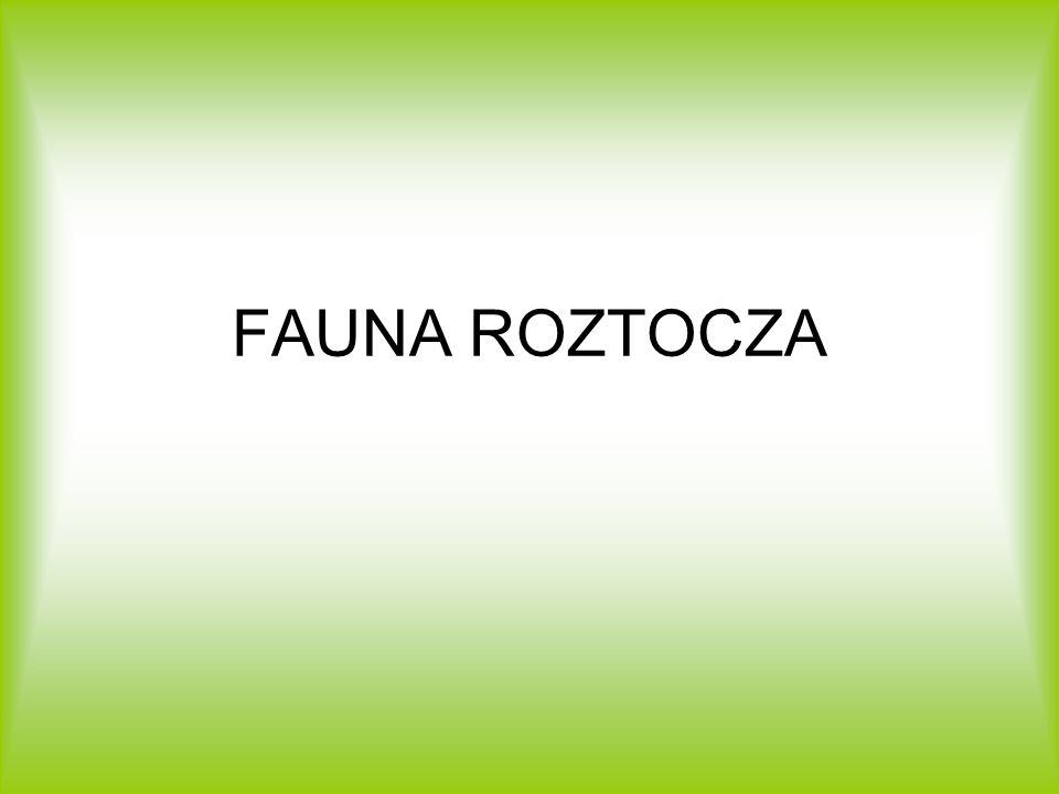 FAUNA ROZTOCZA