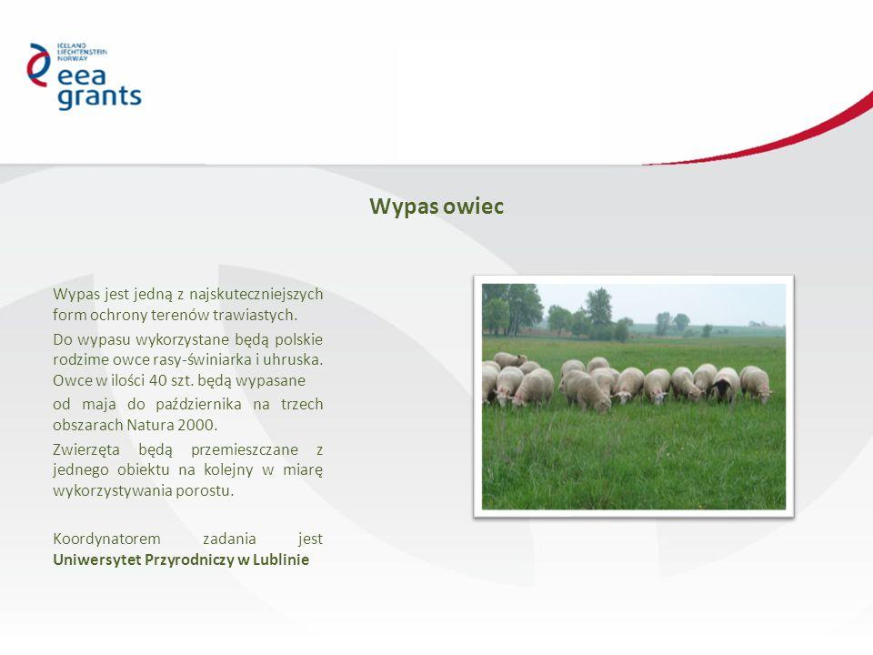 Wypas owiec Wypas jest jedną z najskuteczniejszych form ochrony terenów trawiastych.