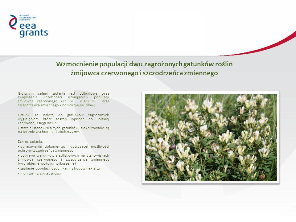 Wzmocnienie populacji dwu zagrożonych gatunków roślin żmijowca czerwonego i szczodrzeńca zmiennego Głównym celem zadania jest odbudowa oraz zwiększenie liczebności istniejących populacji żmijowca czerwonego Echium russicum oraz szczodrzeńca zmiennego Chamaecytisus albus.
