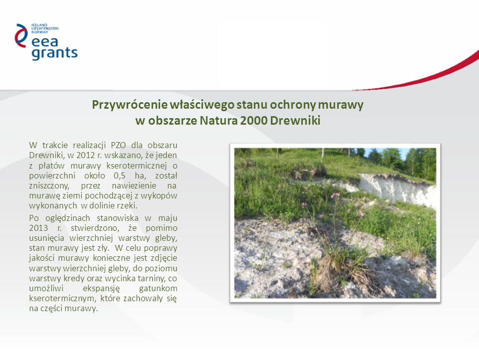Przywrócenie właściwego stanu ochrony murawy w obszarze Natura 2000 Drewniki W trakcie realizacji PZO dla obszaru Drewniki, w 2012 r.