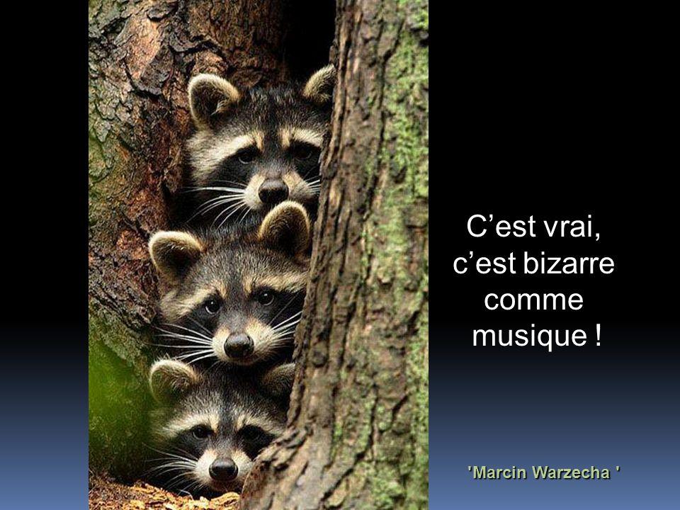 Marcin Warzecha C'est vrai, c'est bizarre comme musique !