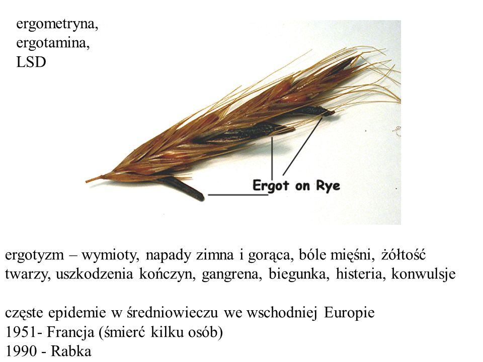 ergotyzm – wymioty, napady zimna i gorąca, bóle mięśni, żółtość twarzy, uszkodzenia kończyn, gangrena, biegunka, histeria, konwulsje częste epidemie w średniowieczu we wschodniej Europie 1951- Francja (śmierć kilku osób) 1990 - Rabka ergometryna, ergotamina, LSD