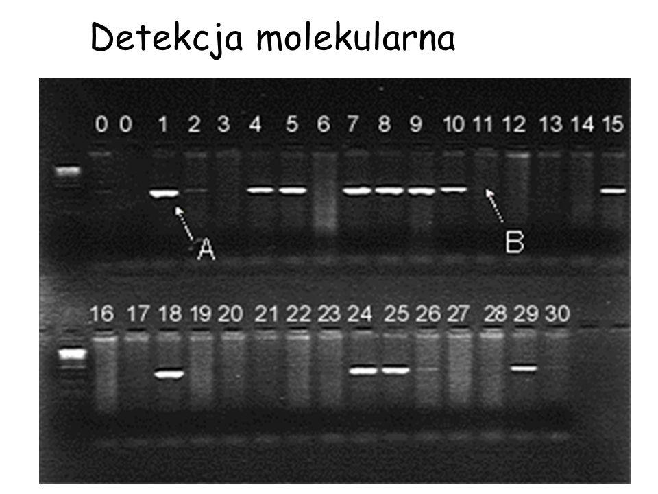 Detekcja molekularna
