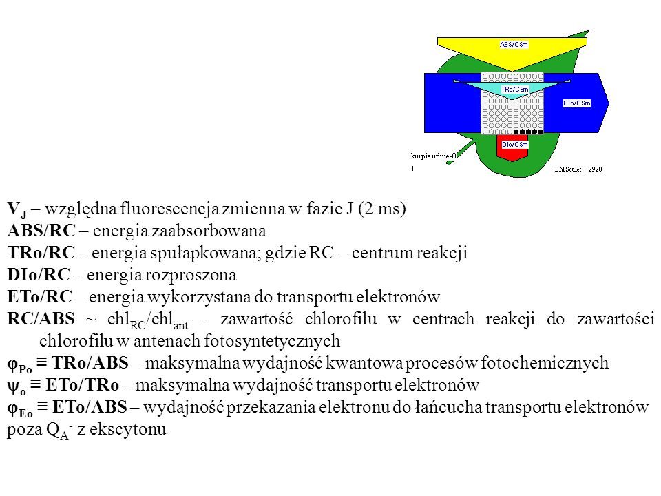 V J – względna fluorescencja zmienna w fazie J (2 ms) ABS/RC – energia zaabsorbowana TRo/RC – energia spułapkowana; gdzie RC – centrum reakcji DIo/RC – energia rozproszona ETo/RC – energia wykorzystana do transportu elektronów RC/ABS ~ chl RC /chl ant – zawartość chlorofilu w centrach reakcji do zawartości chlorofilu w antenach fotosyntetycznych φ Po ≡ TRo/ABS – maksymalna wydajność kwantowa procesów fotochemicznych ψ o ≡ ETo/TRo – maksymalna wydajność transportu elektronów φ Eo ≡ ETo/ABS – wydajność przekazania elektronu do łańcucha transportu elektronów poza Q A - z ekscytonu