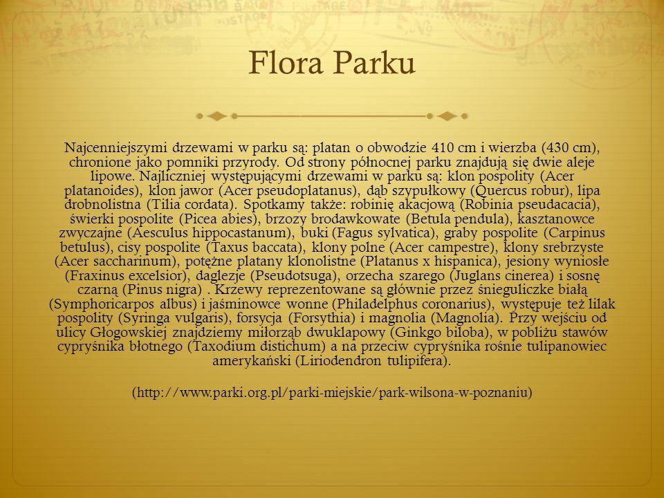 Flora Parku Najcenniejszymi drzewami w parku s ą : platan o obwodzie 410 cm i wierzba (430 cm), chronione jako pomniki przyrody. Od strony pó ł nocnej