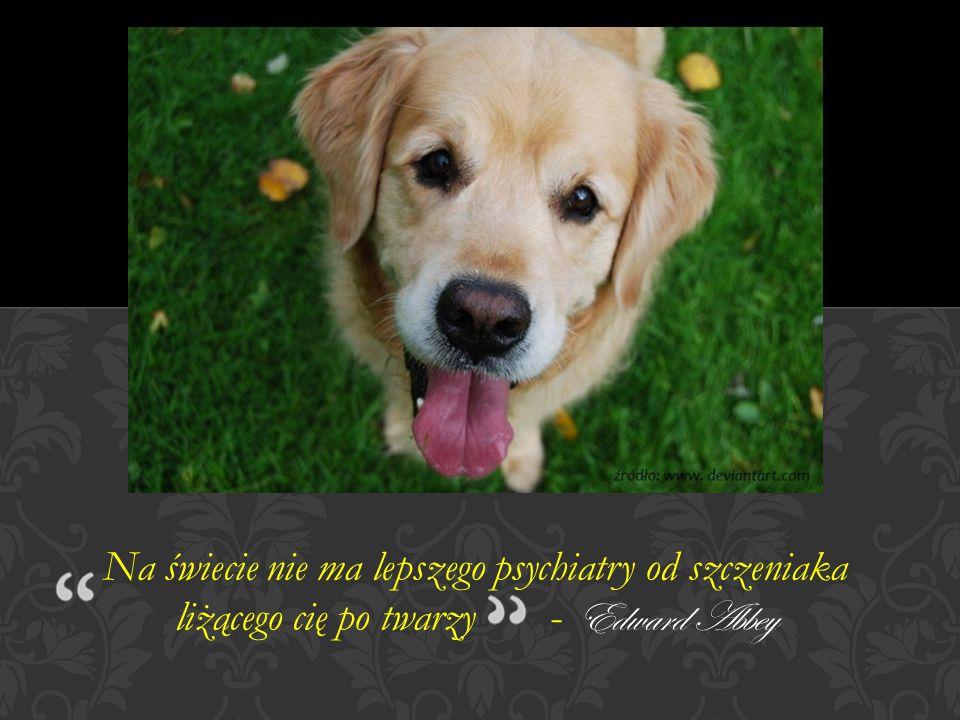 Bo tym się różni świat zwierząt od ludzkości, Że ci drudzy mają obowiązek odpowiedzialności!