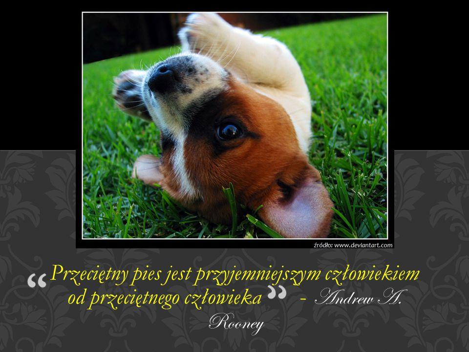 Przeciętny pies jest przyjemniejszym człowiekiem od przeciętnego człowieka - Andrew A. Rooney