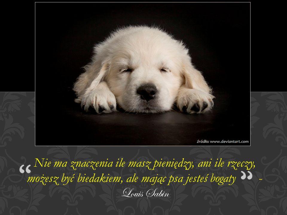 Nie ma znaczenia ile masz pieniędzy, ani ile rzeczy, możesz być biedakiem, ale mając psa jesteś bogaty - Louis Sabin