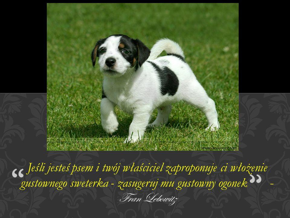 wiersz Barbary Borzymowskiej Psia dusza To tylko pies, tak mówisz, tylko pies...