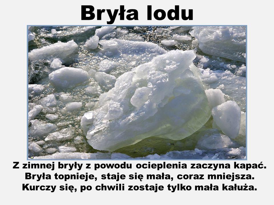 Bryła lodu Z zimnej bryły z powodu ocieplenia zaczyna kapać.