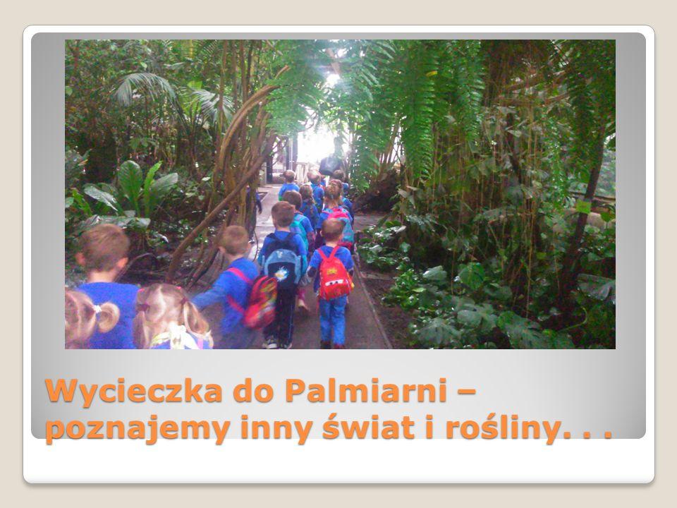 Wycieczka do Palmiarni – poznajemy inny świat i rośliny...