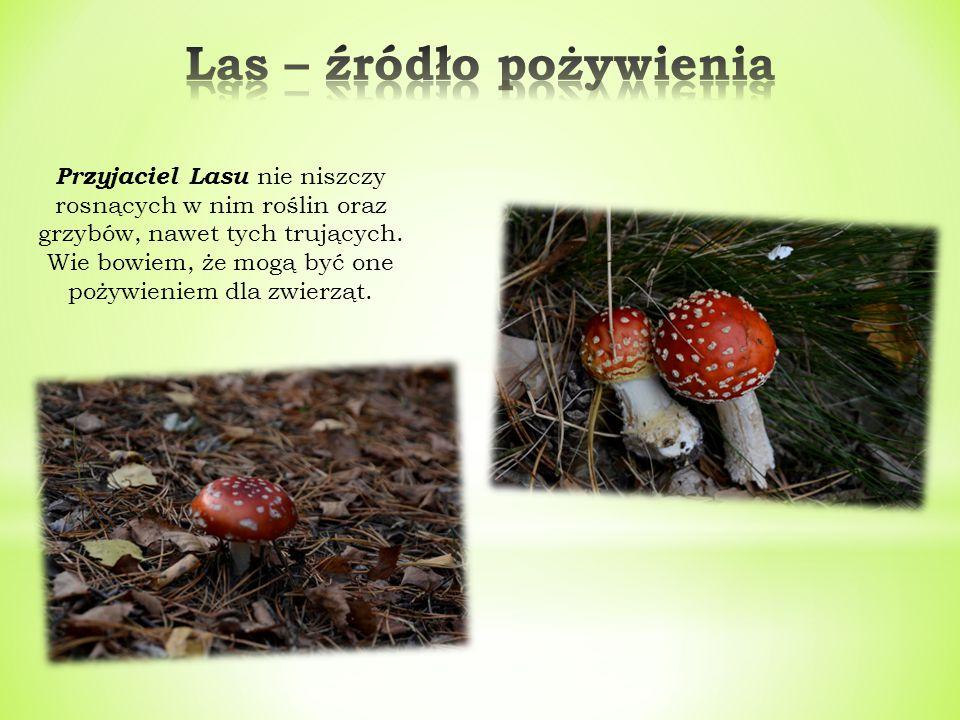 Przyjaciel Lasu nie niszczy rosnących w nim roślin oraz grzybów, nawet tych trujących.