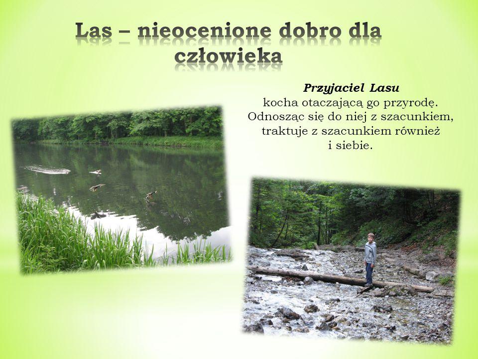 Dla Przyjaciela Lasu, las jest idealnym miejscem wypoczynku i rekreacji.