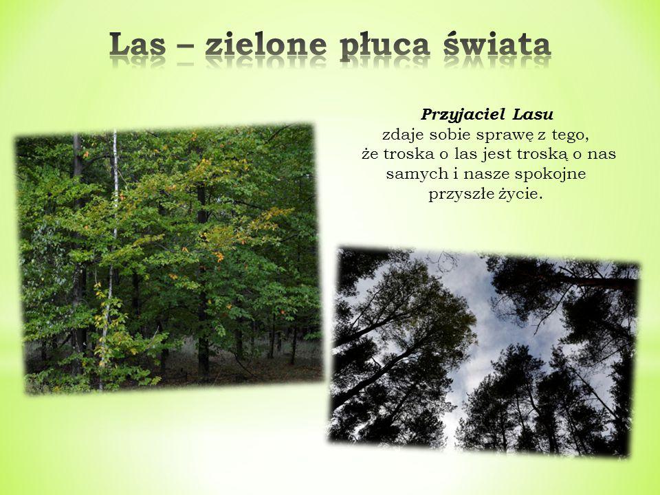 Przyjaciel Lasu zdaje sobie sprawę z tego, że troska o las jest troską o nas samych i nasze spokojne przyszłe życie.