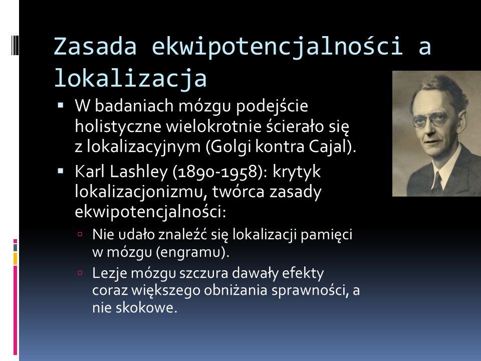 Zasada ekwipotencjalności a lokalizacja  W badaniach mózgu podejście holistyczne wielokrotnie ścierało się z lokalizacyjnym (Golgi kontra Cajal).