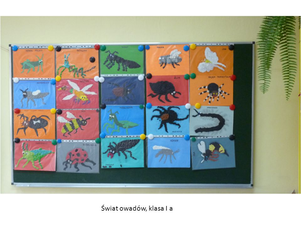 Świat owadów, klasa I a