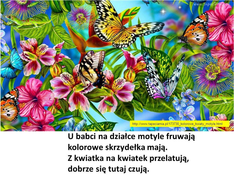 U babci na działce motyle fruwają kolorowe skrzydełka mają. Z kwiatka na kwiatek przelatują, dobrze się tutaj czują. http://www.tapeciarnia.pl/173730_