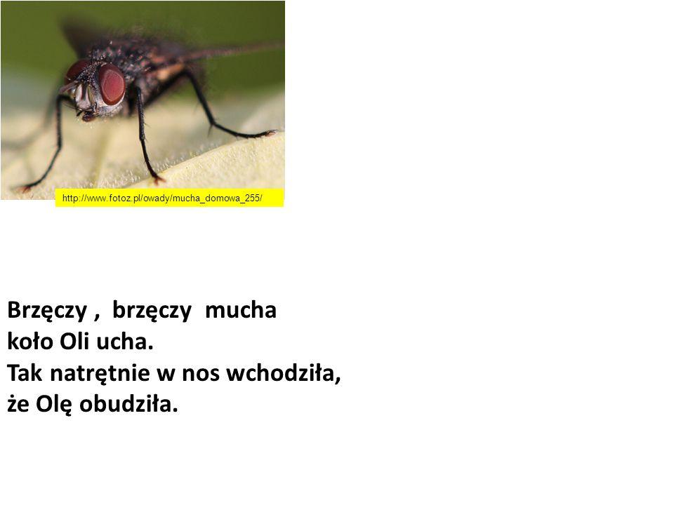 Brzęczy, brzęczy mucha koło Oli ucha. Tak natrętnie w nos wchodziła, że Olę obudziła. http://www.fotoz.pl/owady/mucha_domowa_255/
