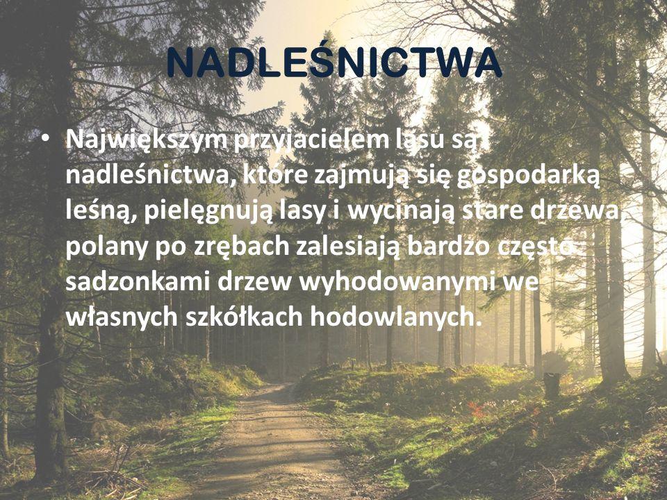 NADLE Ś NICTWA Nadleśnictwo składa się z kilku leśnictw.