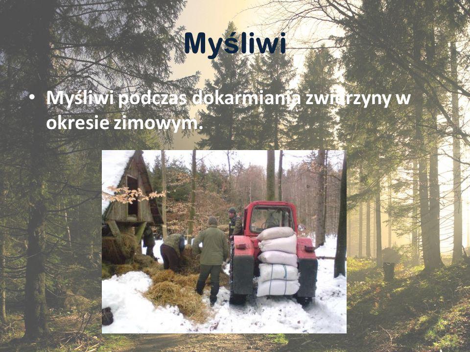 Ssaki Dzik Przyjacielem lasu i leśników jest dzik.
