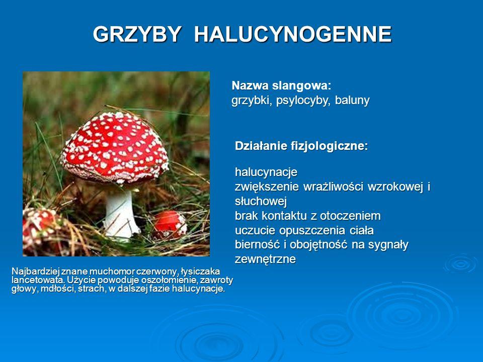 GRZYBY HALUCYNOGENNE Najbardziej znane muchomor czerwony, łysiczaka lancetowata. Użycie powoduje oszołomienie, zawroty głowy, mdłości, strach, w dalsz