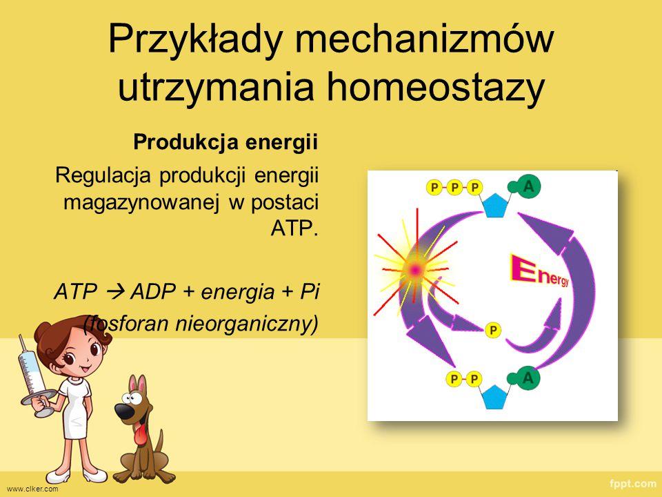 Przykłady mechanizmów utrzymania homeostazy Produkcja energii Regulacja produkcji energii magazynowanej w postaci ATP. ATP  ADP + energia + Pi (fosfo