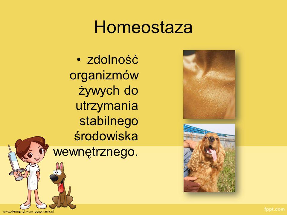 zdolność organizmów żywych do utrzymania stabilnego środowiska wewnętrznego. www.dermal.pl, www.dogomania.pl