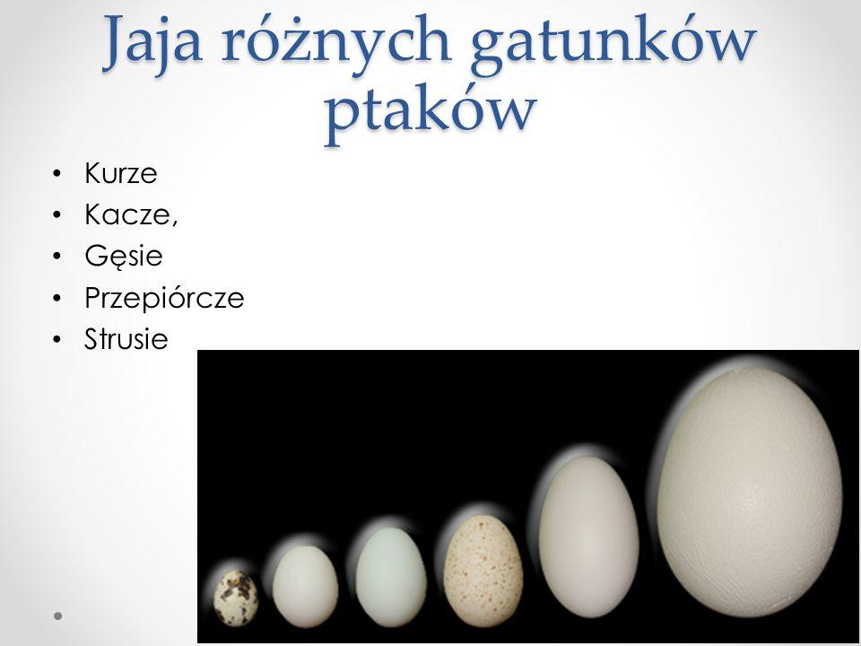 Jaja różnych gatunków ptaków Kurze Kacze, Gęsie Przepiórcze Strusie