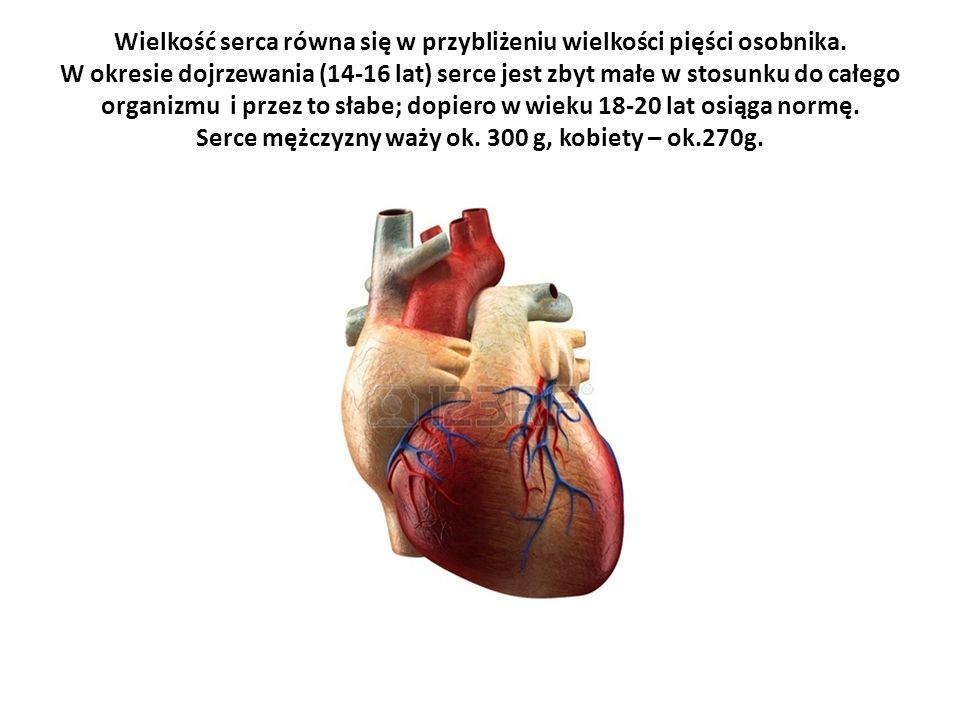 Wielkość serca równa się w przybliżeniu wielkości pięści osobnika. W okresie dojrzewania (14-16 lat) serce jest zbyt małe w stosunku do całego organiz