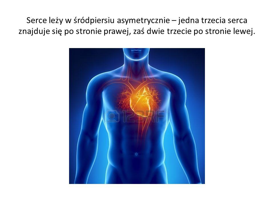 Serce leży w śródpiersiu asymetrycznie – jedna trzecia serca znajduje się po stronie prawej, zaś dwie trzecie po stronie lewej.