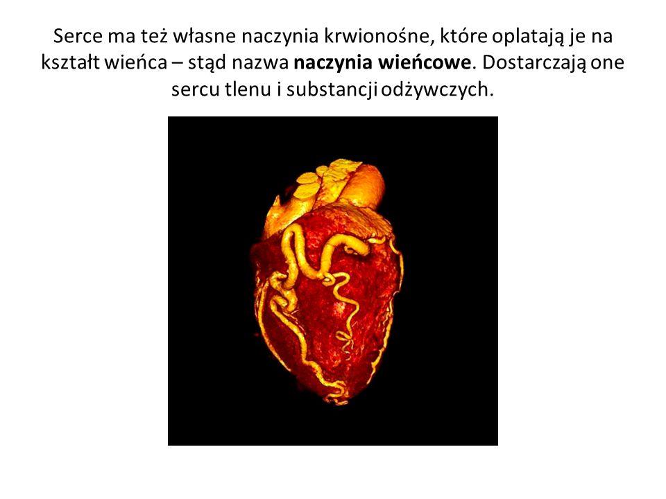 Serce ma też własne naczynia krwionośne, które oplatają je na kształt wieńca – stąd nazwa naczynia wieńcowe. Dostarczają one sercu tlenu i substancji