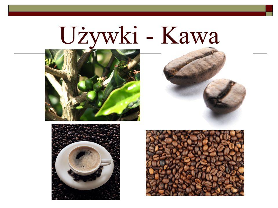 Kawa Kopi luwak, kawa luwak - gatunek kawy pochodzący z południowo- wschodniej Azji, wytwarzany z ziaren kawy, które wydobywane są z odchodów zwierzęcia z rodziny łaszowatych, łaskuna muzanga nazywanego popularnie cywetą, a lokalnie luwak.