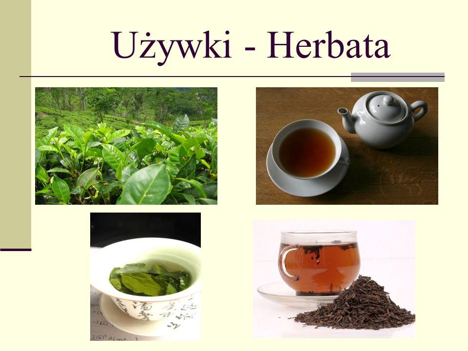 Używki - Herbata