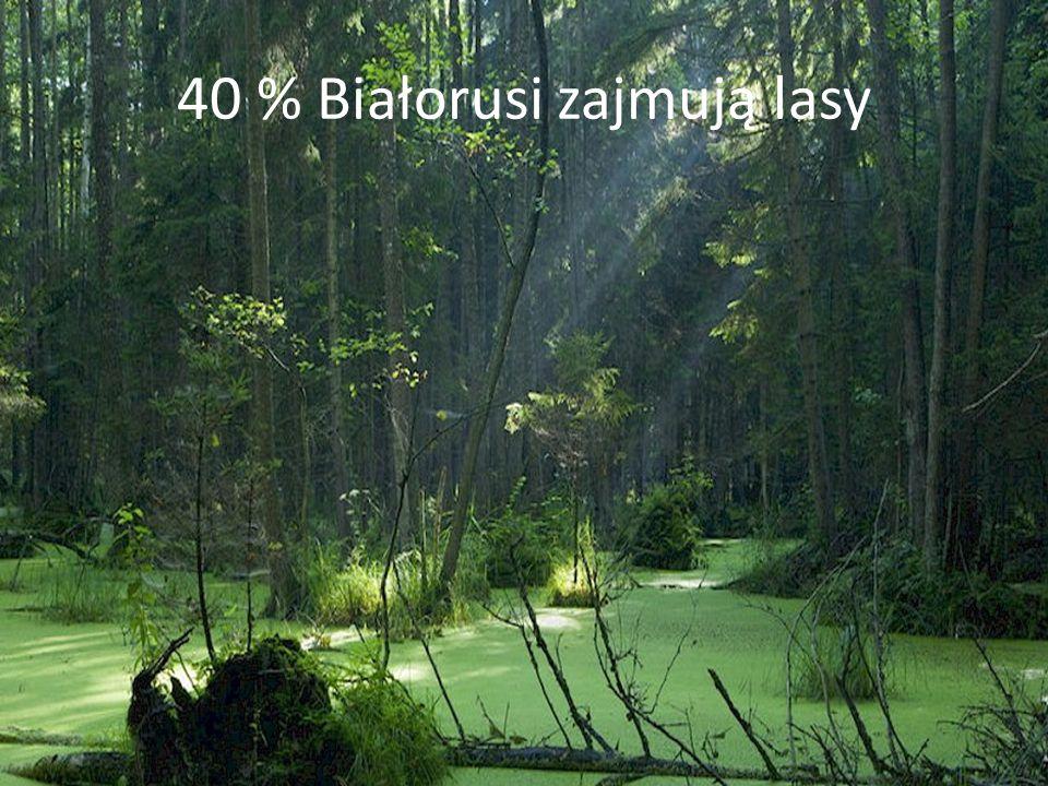40 % Białorusi zajmują lasy