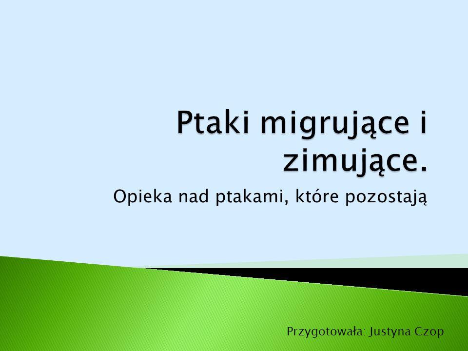 Opieka nad ptakami, które pozostają Przygotowała: Justyna Czop