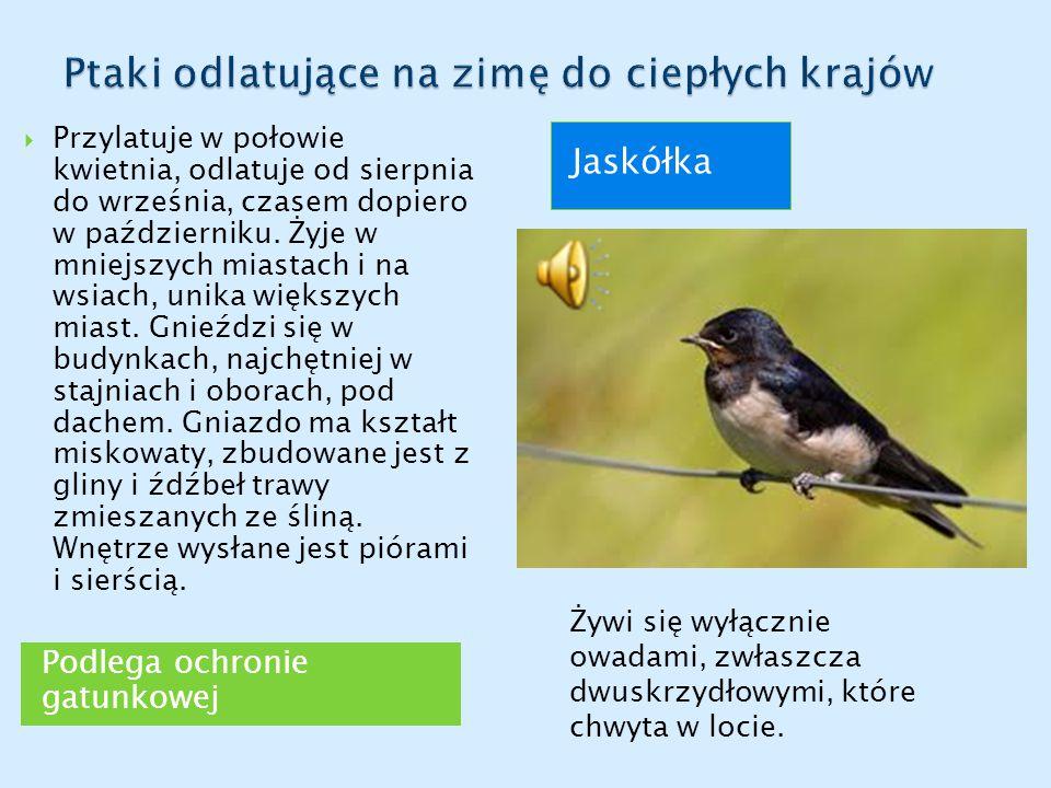 Podlega ochronie gatunkowej Jaskółka  Przylatuje w połowie kwietnia, odlatuje od sierpnia do września, czasem dopiero w październiku.