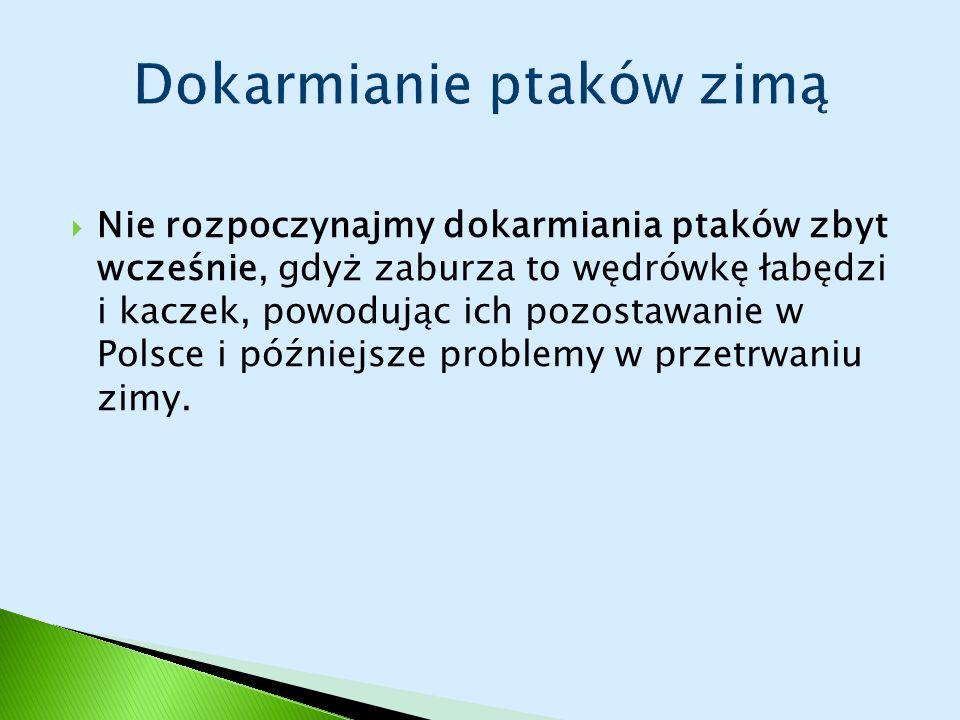  Nie rozpoczynajmy dokarmiania ptaków zbyt wcześnie, gdyż zaburza to wędrówkę łabędzi i kaczek, powodując ich pozostawanie w Polsce i późniejsze problemy w przetrwaniu zimy.