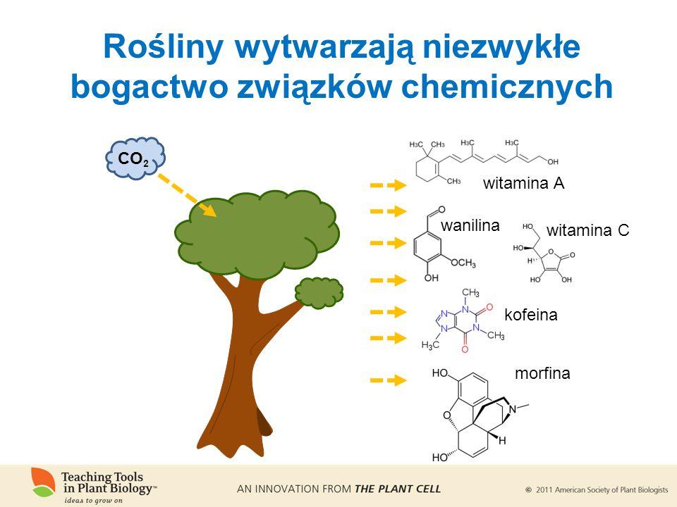 Rośliny wytwarzają niezwykłe bogactwo związków chemicznych witamina A witamina C wanilina kofeina morfina CO 2