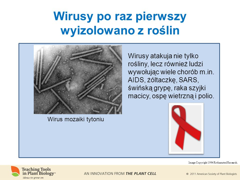 Wirusy po raz pierwszy wyizolowano z roślin Wirus mozaiki tytoniu Wirusy atakuja nie tylko rośliny, lecz również ludzi wywołując wiele chorób m.in.