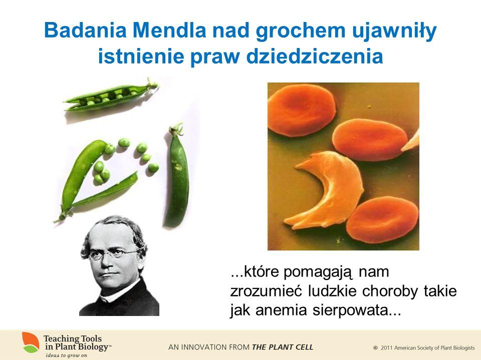...które pomagają nam zrozumieć ludzkie choroby takie jak anemia sierpowata...