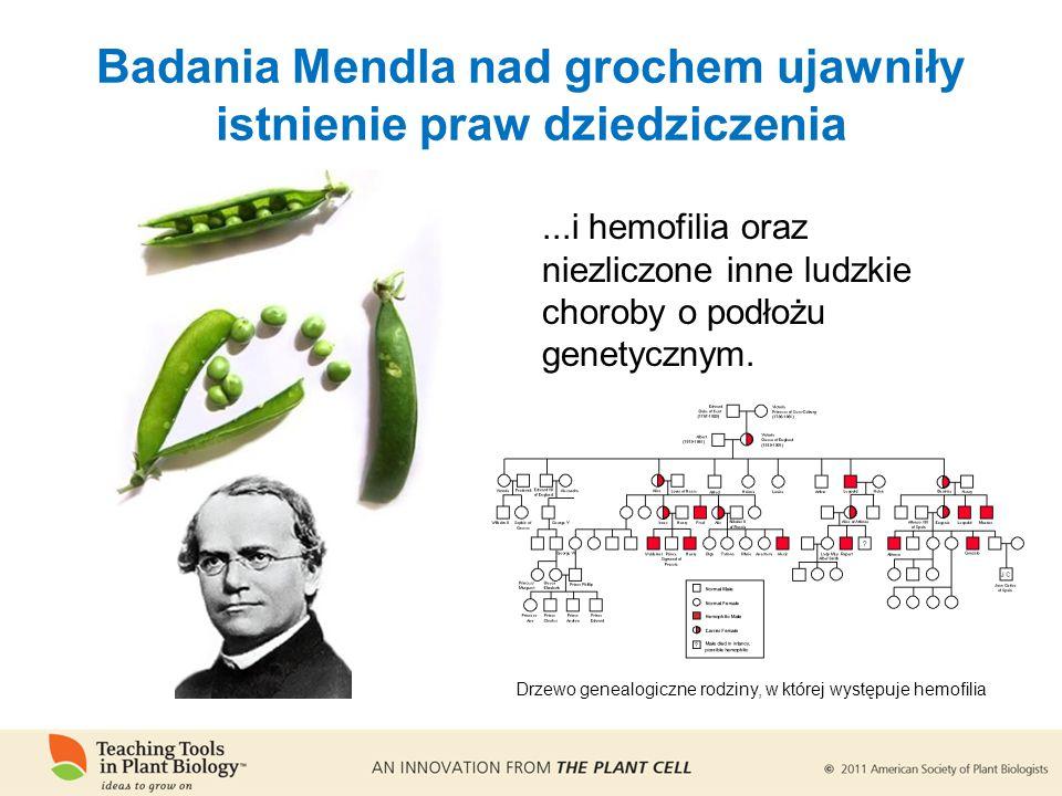 ...i hemofilia oraz niezliczone inne ludzkie choroby o podłożu genetycznym.