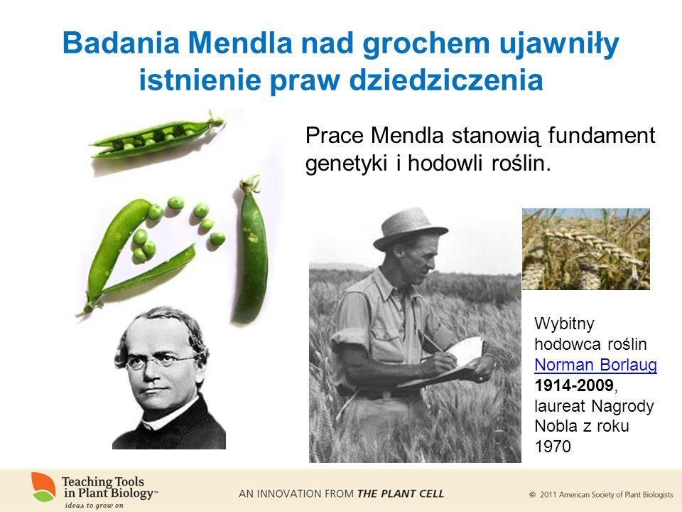 Prace Mendla stanowią fundament genetyki i hodowli roślin.