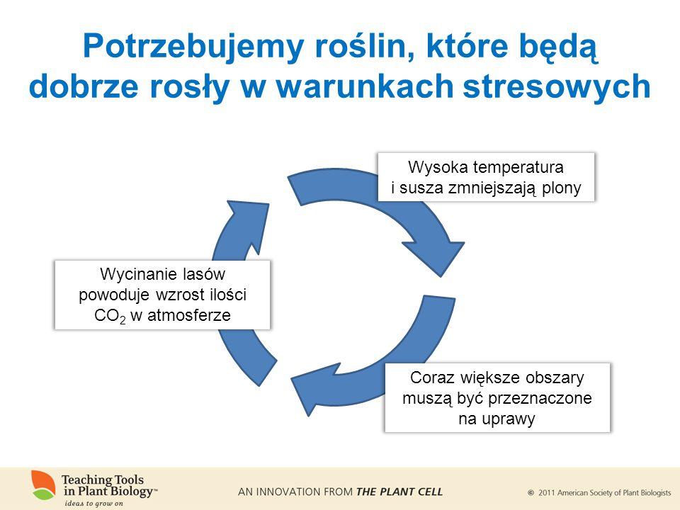 Potrzebujemy roślin, które będą dobrze rosły w warunkach stresowych Wysoka temperatura i susza zmniejszają plony Coraz większe obszary muszą być przeznaczone na uprawy Wycinanie lasów powoduje wzrost ilości CO 2 w atmosferze