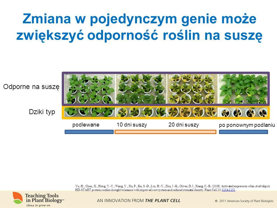 Zmiana w pojedynczym genie może zwiększyć odporność roślin na suszę Yu, H., Chen, X., Hong, Y.-Y., Wang, Y., Xu, P., Ke, S.-D., Liu, H.-Y., Zhu, J.-K., Oliver, D.J., Xiang, C.-B.