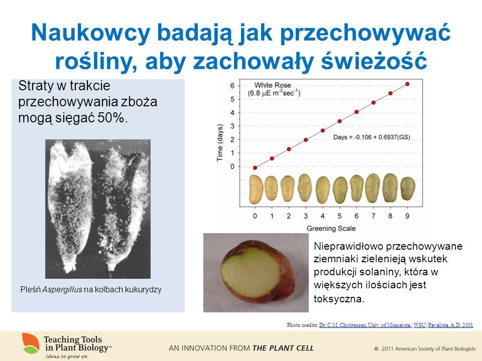 Nieprawidłowo przechowywane ziemniaki zielenieją wskutek produkcji solaniny, która w większych ilościach jest toksyczna.