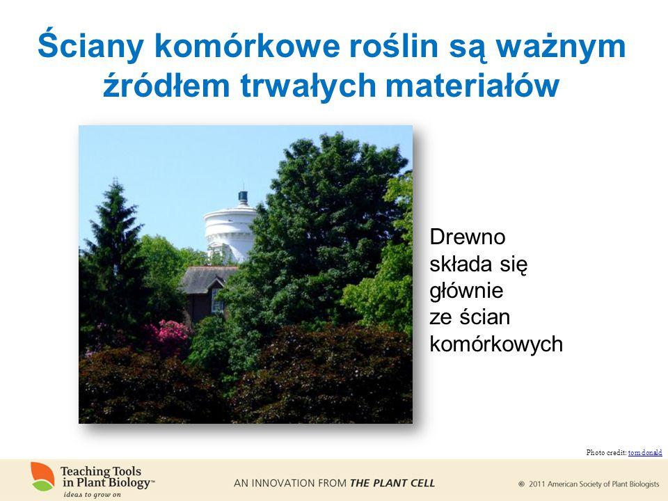Ściany komórkowe roślin są ważnym źródłem trwałych materiałów Drewno składa się głównie ze ścian komórkowych Photo credit: tom donaldtom donald