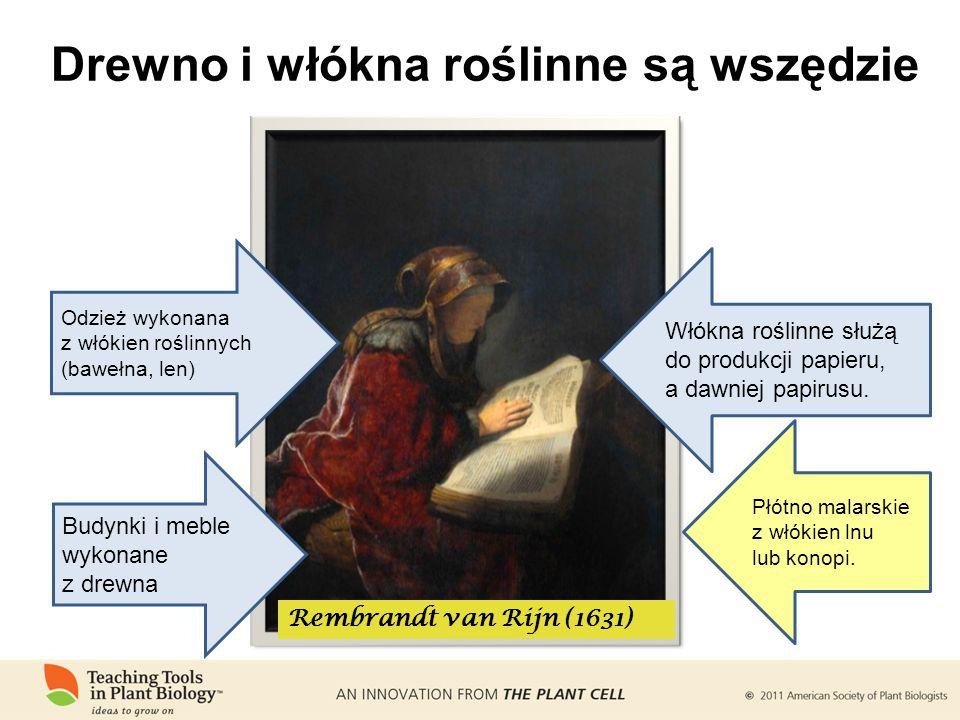 Drewno i włókna roślinne są wszędzie Rembrandt van Rijn (1631) Odzież wykonana z włókien roślinnych (bawełna, len) Włókna roślinne służą do produkcji papieru, a dawniej papirusu.